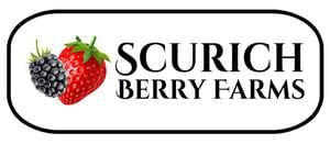 Scurich Berry Farms