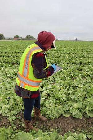 Field Inspection