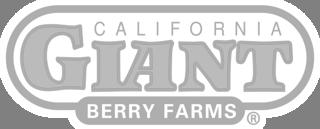 CaliforniaGiantBerryFarms-3